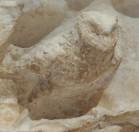 66 mithra - hibou